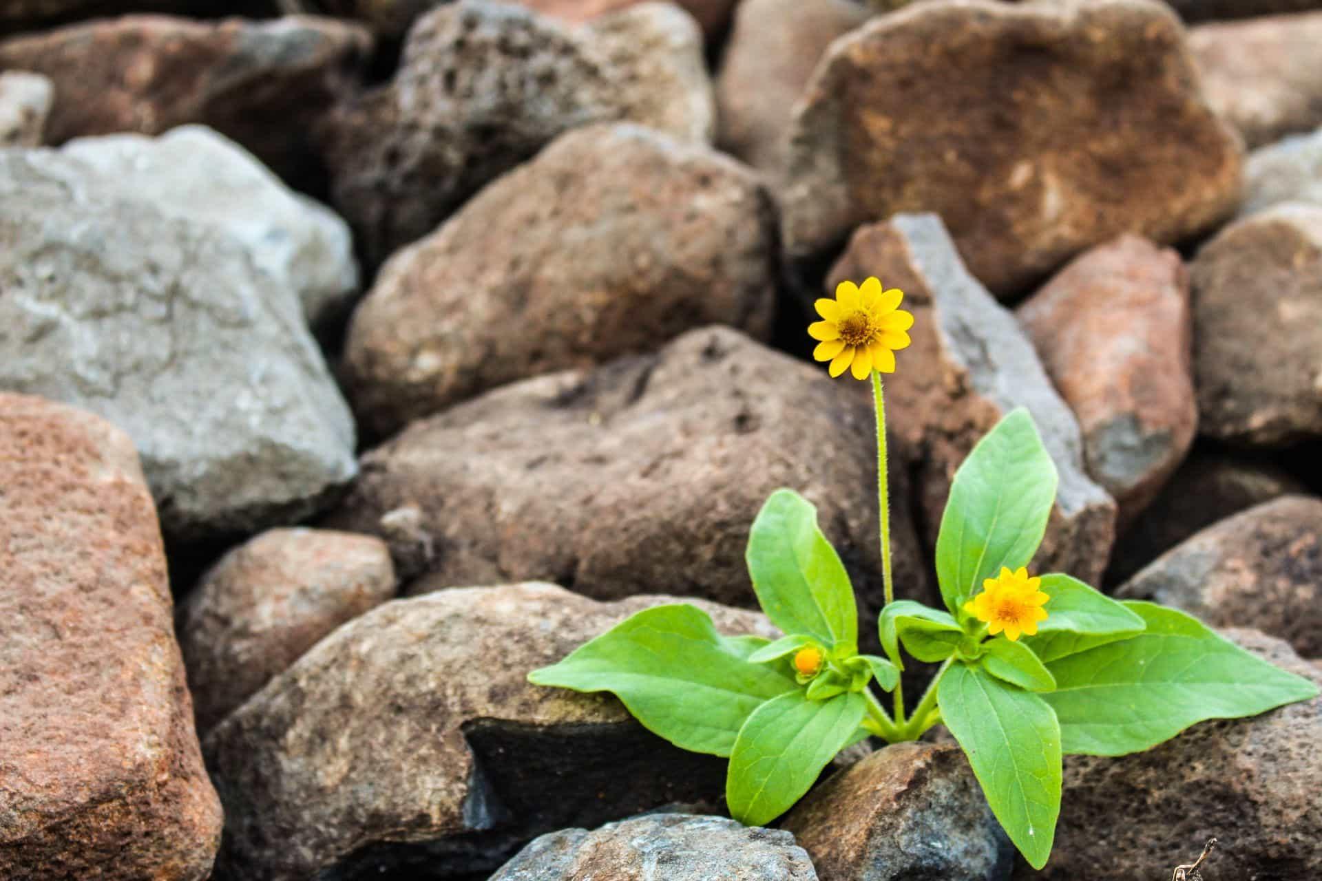 fleur nature sauvage